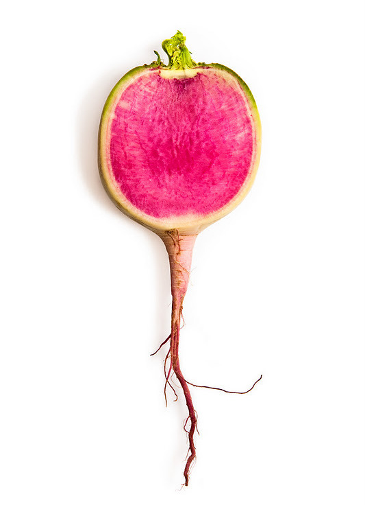 watermelon radish by phil kline